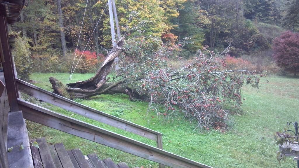 Sentinal tree down.
