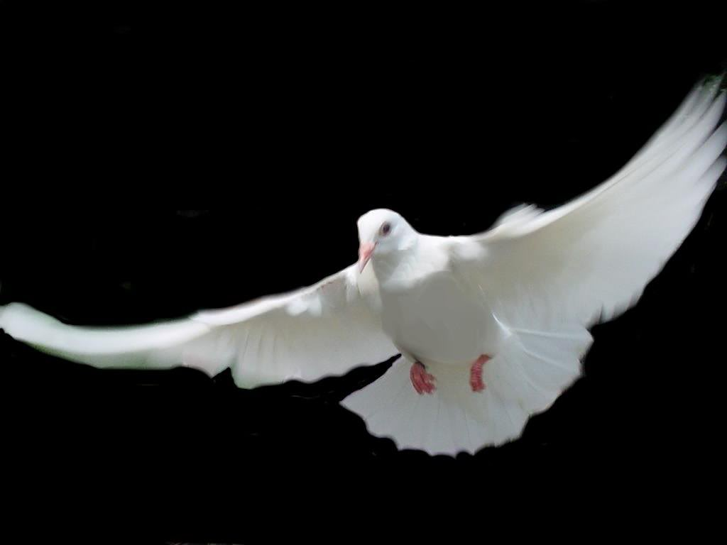 DOVE1, borrowed image.