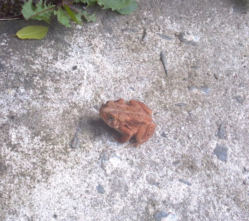 Pumpkin amphibian.