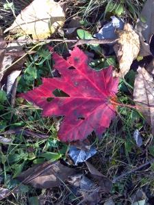 2014-10-19_15-43-11_620